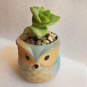Other - Succulent in Ceramic Owl Planter Pot